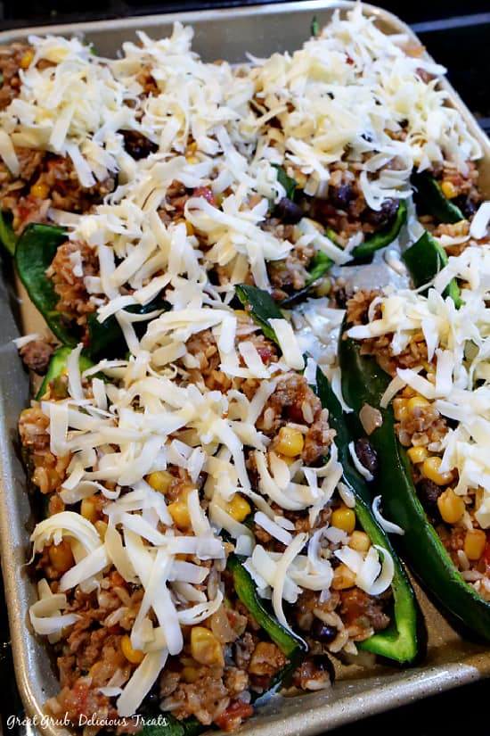 Stuffed poblano peppers on a cookie sheet with shredded cheese on top.